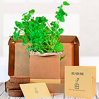 Coriander Herb Kit