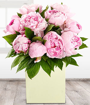 Perfect Peonies - Same Day Flowers - eFlorist.co.uk