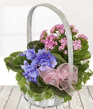 Easter gifts ideal easter gifts easter flowers and gifts online planted basket negle Images