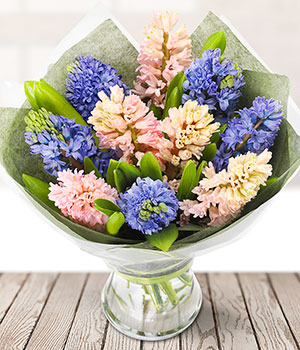 hyacinth pink blue hyacinth flowers delivered flowers online
