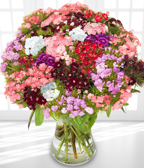 birthday flowers sweet william