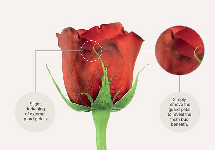 Rose Guard Petals Example
