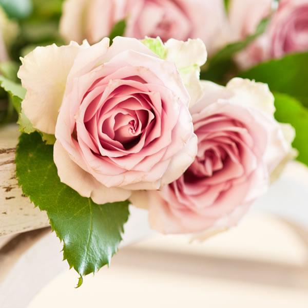 Rose June Birth Flower