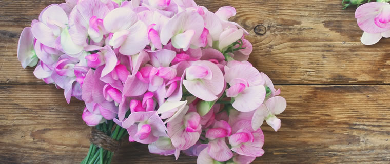 Sweet Pea April Birth Flower